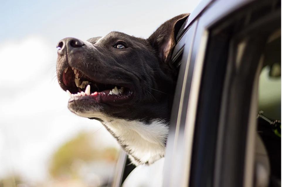 Conseils pour voyager avec des chiens dans un camping-car et une caravane
