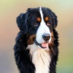 Emmenez un chien lors de votre prochaine aventure en plein air